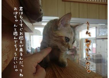 子猫ズ.JPEG