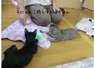 子猫ズ3.JPEG