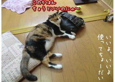 子猫ズ5.JPEG