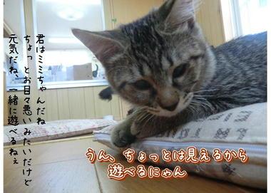 子猫ズ6.JPEG