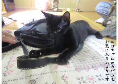 子猫ズ9.JPEG