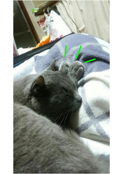 寝てるラピス.JPG